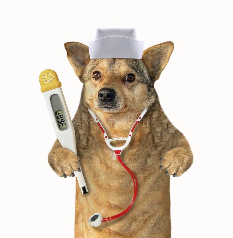 Hund doc med medicinska instrument royaltyfria bilder