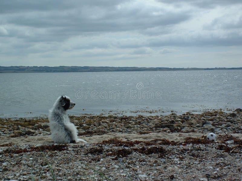 Download Hund durch das Meer stockfoto. Bild von ozean, meer, wasser - 37028