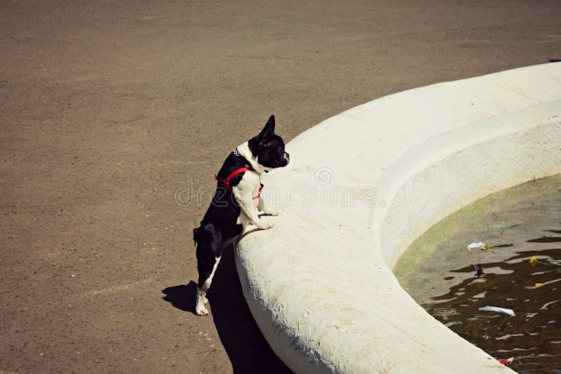 Hund Durst Brunnen Wasser ukraine stockfotos