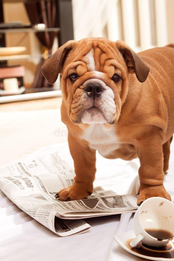 Hund, eine Zeitung und Streuungkaffee. stockfotos