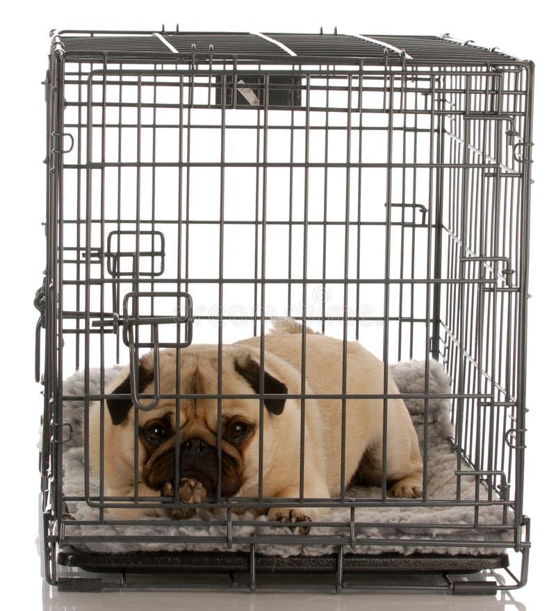 Hund in einem Drahtrahmen stockbild