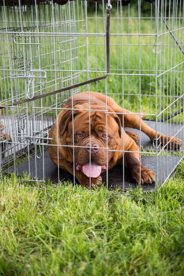 Hund in einem Käfig