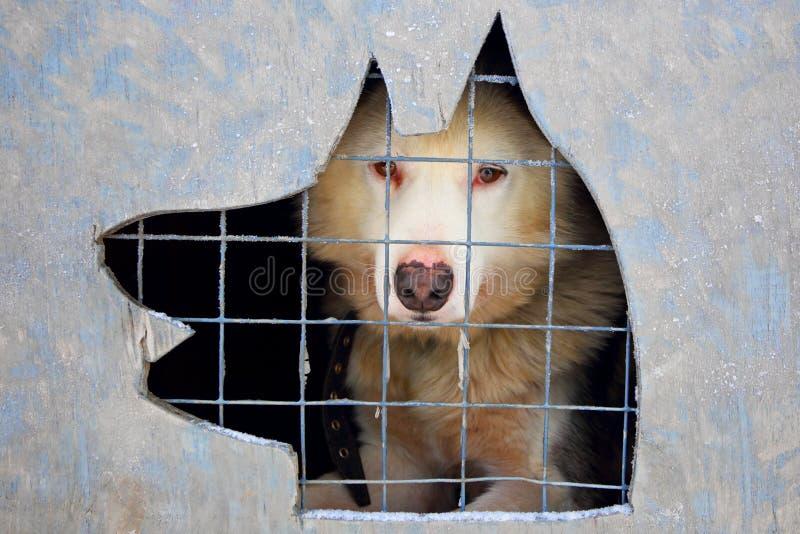 Hund in einem Käfig stockbild