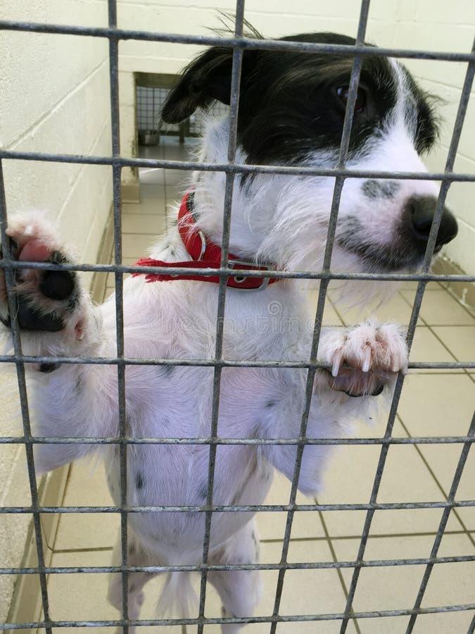 Hund an einem Rettungsschutz in einem Käfig lizenzfreie stockbilder