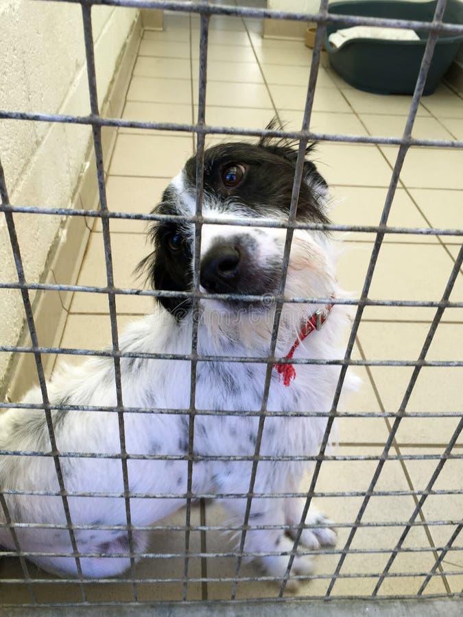 Hund an einem Rettungsschutz saß in einem Käfig lizenzfreie stockfotos