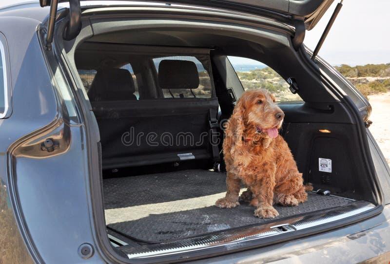 Hund in einem Stiefel stockfoto