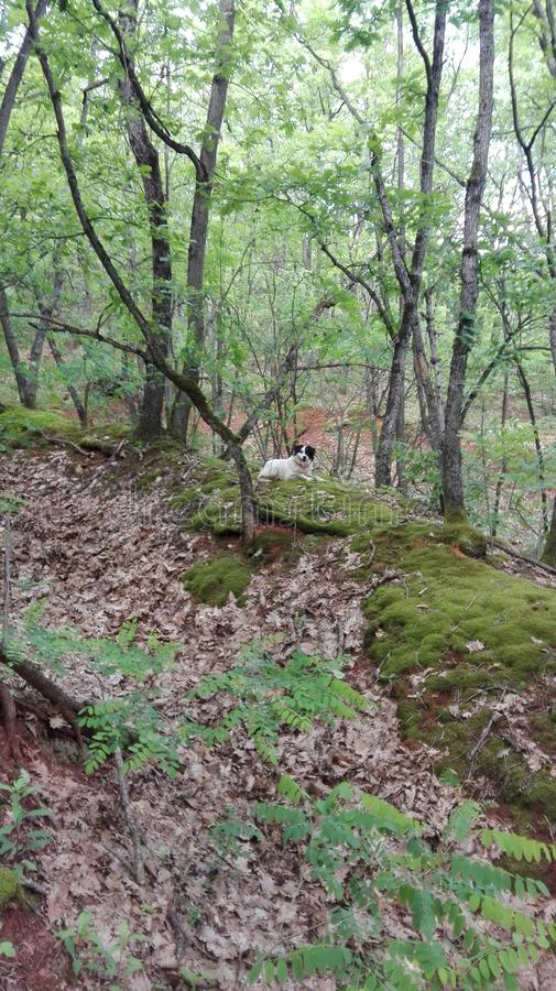 Hund in einem Wald stockfotos
