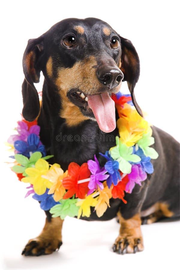 Hund in einem Wreath von den Blumen stockbilder
