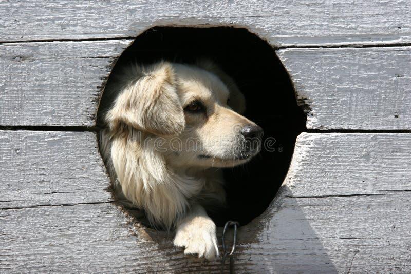 Hund in einer Hundehütte lizenzfreie stockfotografie