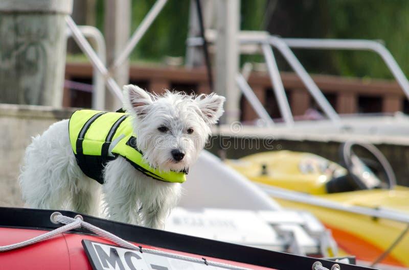Hund in einer Schwimmweste auf Bootsdeck stockfotografie