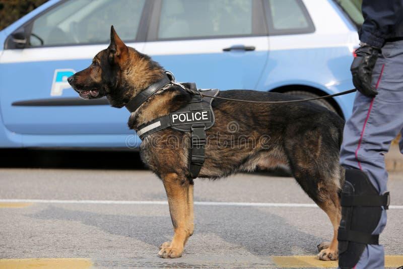 Hund- enhet av polisen för upptäckten av den explosiva materiaen arkivbild