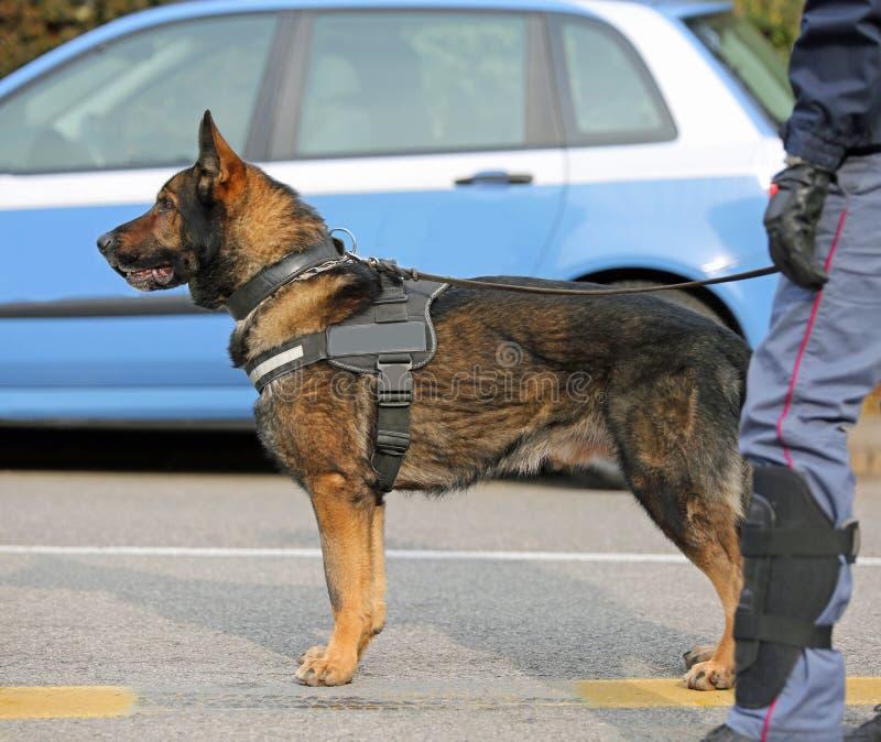 Hund- enhet för hund av polisen royaltyfria bilder