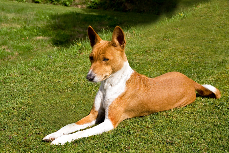 Hund entspannt auf Rasen stockfoto