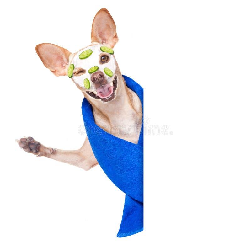 Hund för brunnsort för Wellnessskönhetmaskering royaltyfria bilder