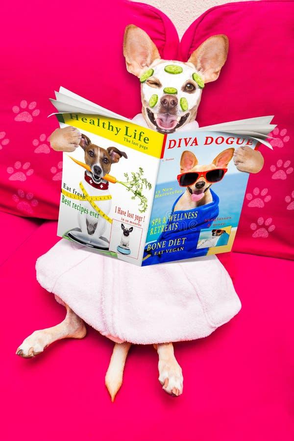 Hund för brunnsort för Wellnessskönhetmaskering royaltyfri fotografi