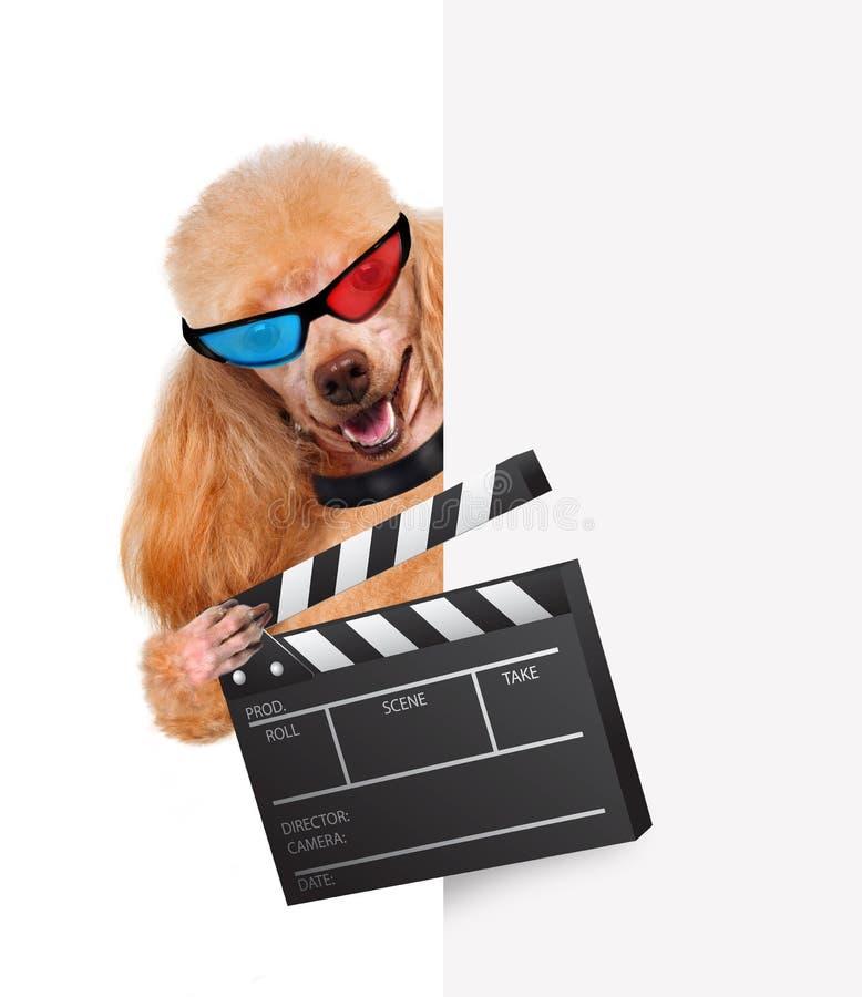 Hund för direktör för filmclapperbräde. arkivbilder