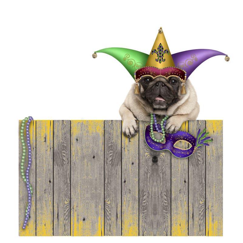 Hund för mops för Mardi graskarneval med harlekingyckelmakarehatten och den venetian maskeringen som hänger på trästaketet arkivbild