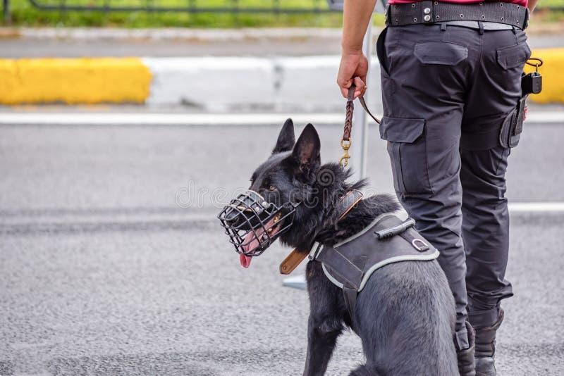 Hund för säkerhet för turkiska polishåll svart royaltyfri foto