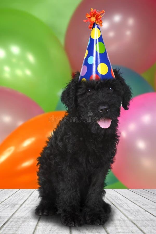 Hund för valp för ryssTerrier svart med en födelsedagberöm dem royaltyfri foto