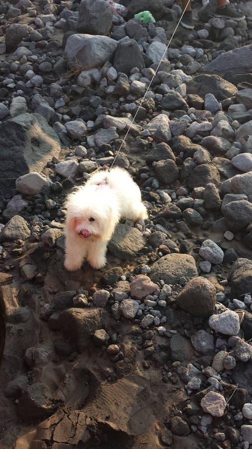 Hund in fast ausgetrocknetem guatemaltekischem Fluss lizenzfreies stockfoto
