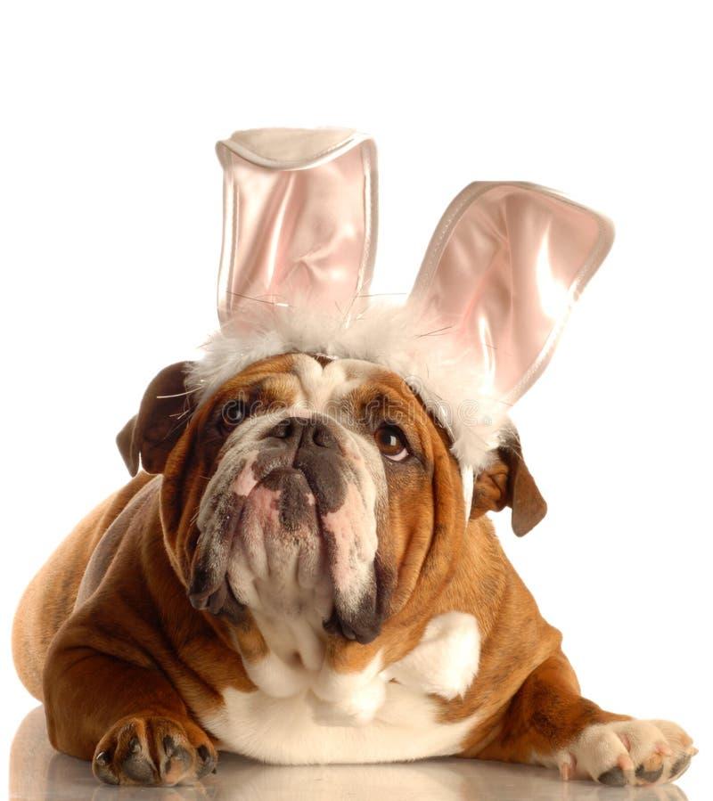 Hund gekleidet als Osterhase stockbild