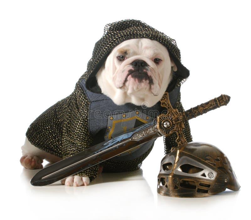 Hund gekleidet als Ritter stockfoto