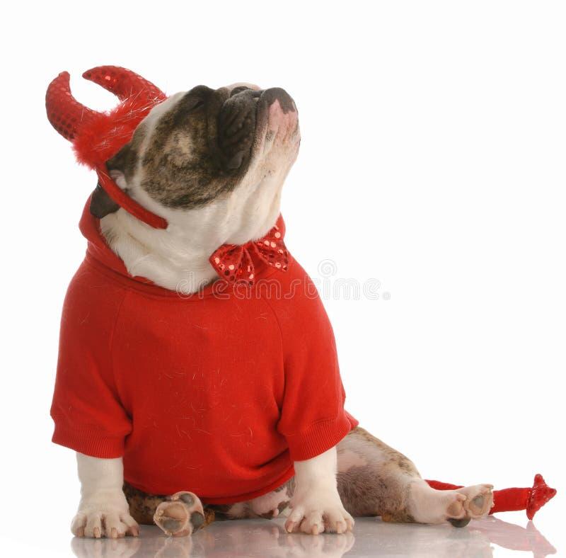 Hund gekleidet als Teufel stockbild