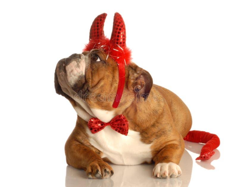 Hund gekleidet herauf als Teufel stockfotografie