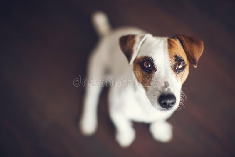 Hund hemma royaltyfria bilder