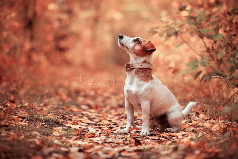 Hund am Herbst stockfoto
