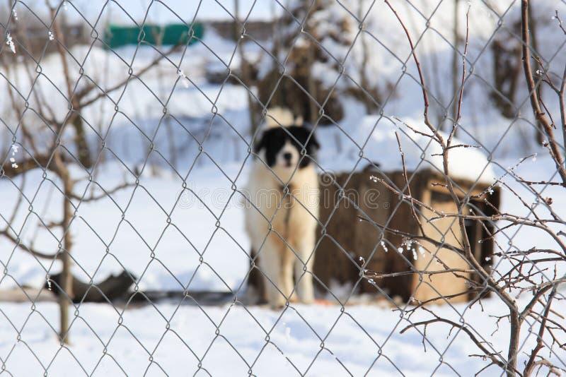 Hund hinter einem Zaun lizenzfreie stockfotografie