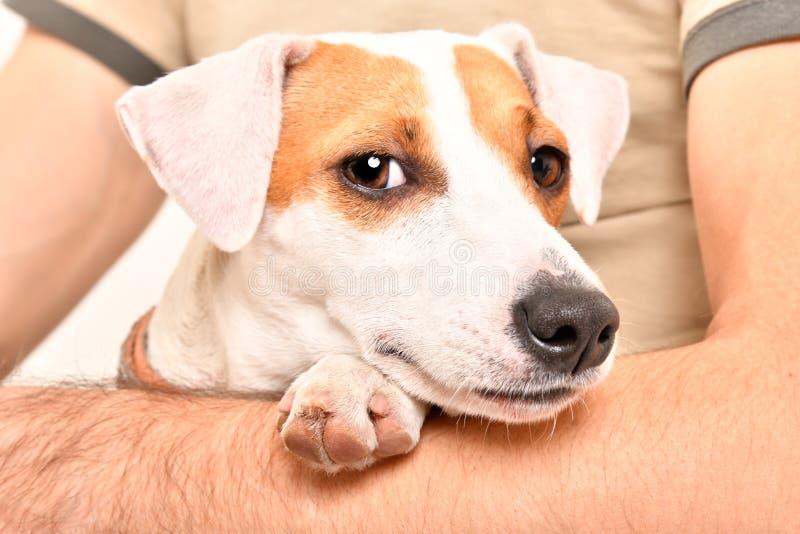 Hund i armarna av hans ägare royaltyfri foto