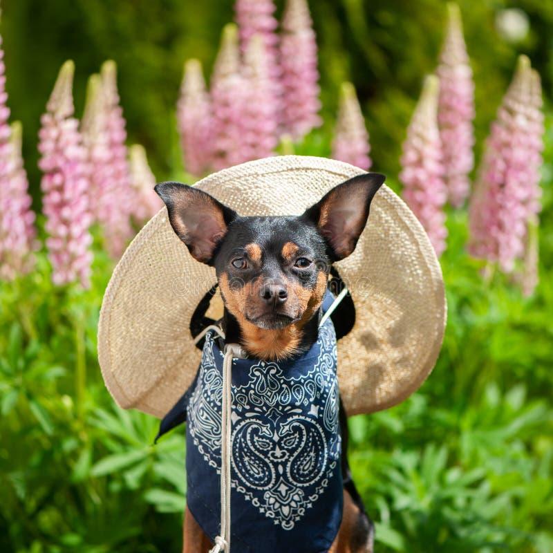 Hund i bilden av en bonde, en trädgårdsodlare, en blommaodlare arkivbild