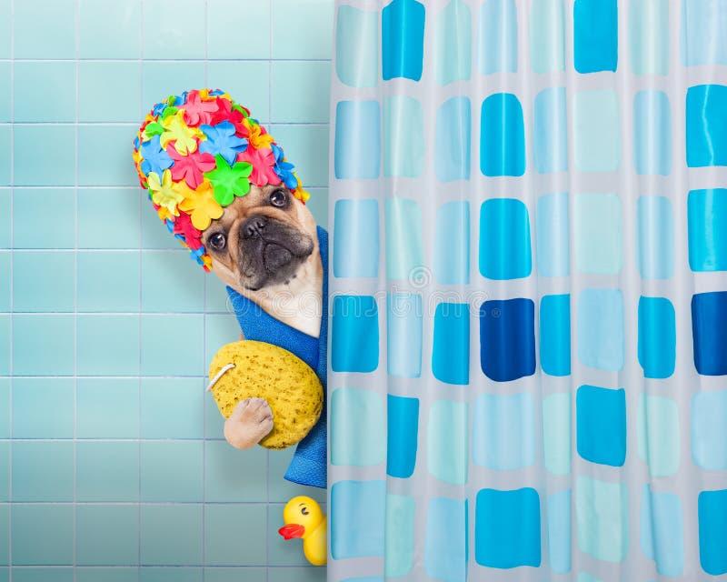 Hund i dusch royaltyfri bild