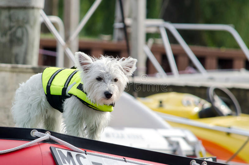 Hund i en flytväst på fartygdäck arkivbild