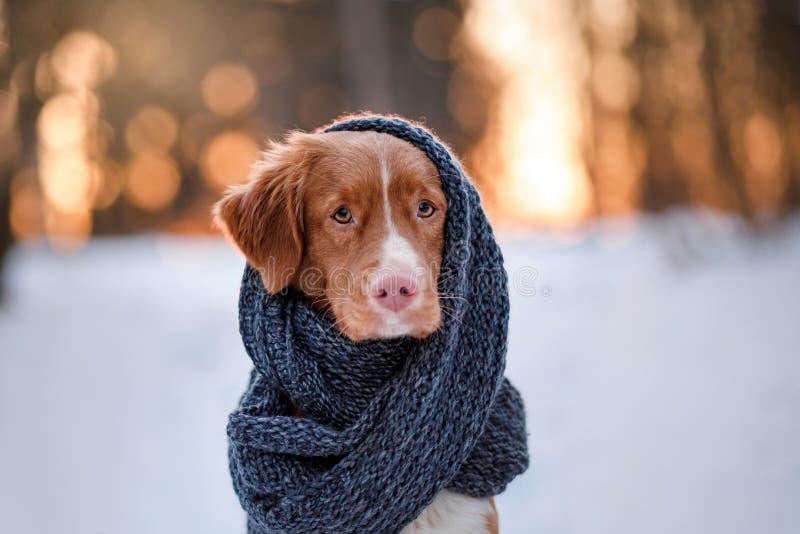Hund i en parkera på naturen, vinter arkivbild