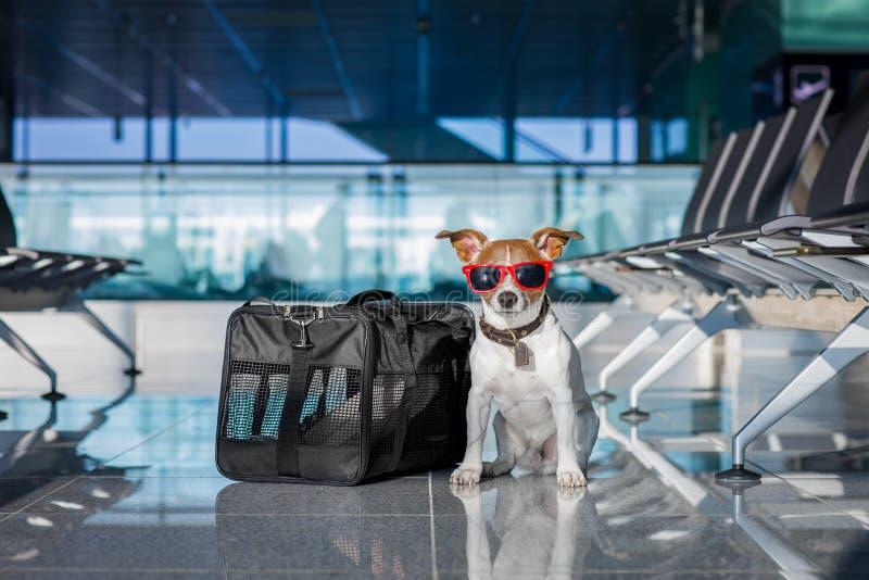 Hund i flygplatsterminal på semester arkivbilder