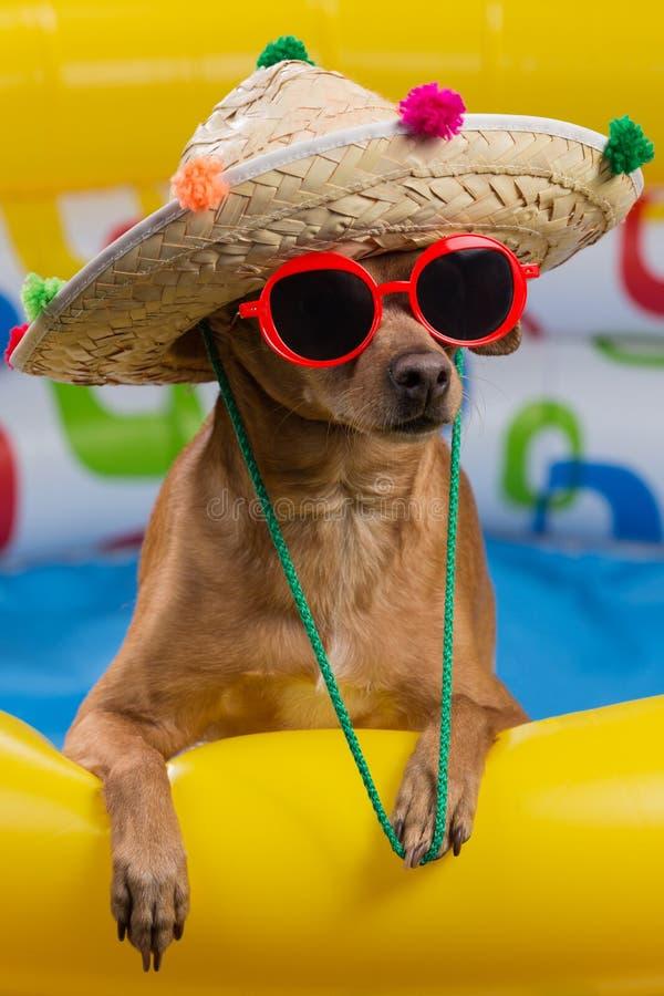 Hund i hatt och exponeringsglas i en ljus uppblåsbar pöl, begrepp av semestern och turism, närbild av skytte arkivbild