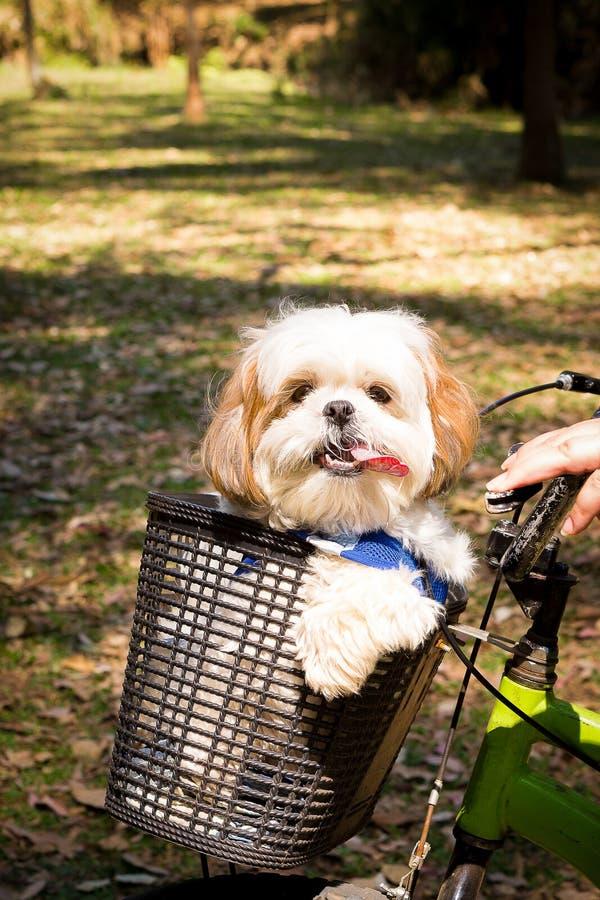 Hund i korgen royaltyfri fotografi