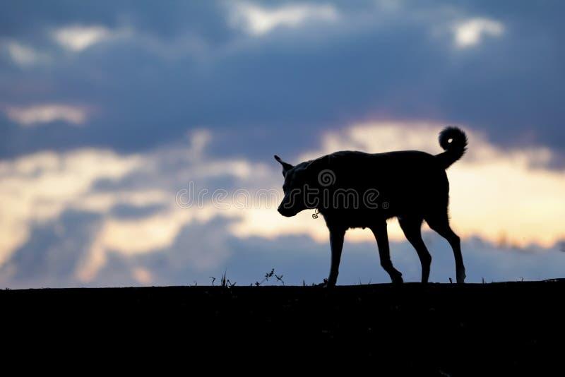 Hund I Kupan Royaltyfria Bilder