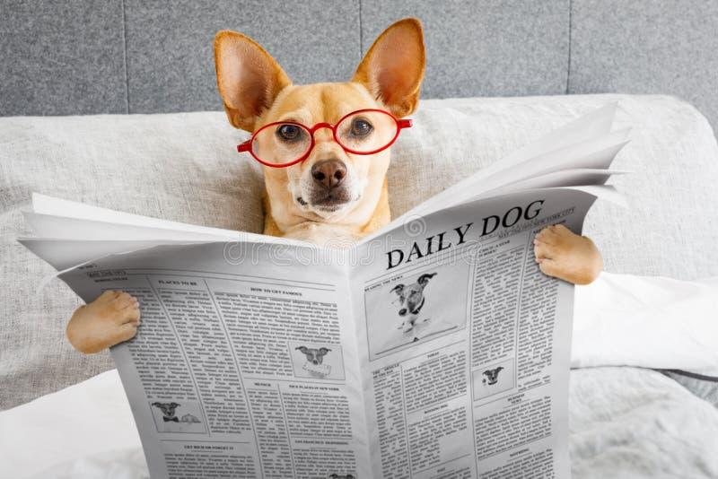 Hund i läs- tidning för säng arkivbilder