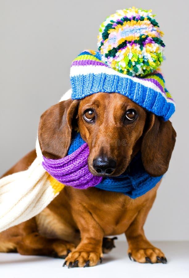 Hund i lock royaltyfri bild