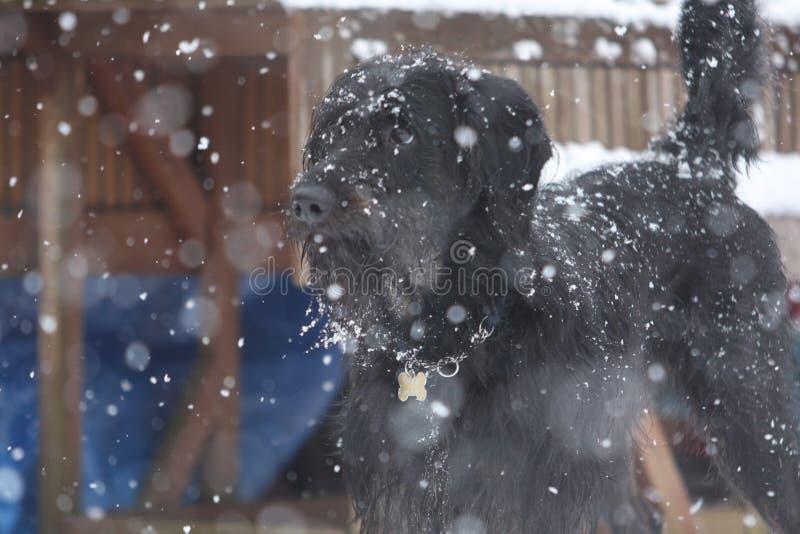 Hund i majestätisk snö royaltyfri bild