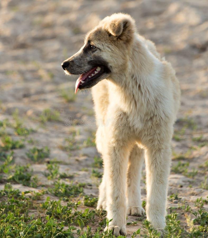 Download Hund i natur fotografering för bildbyråer. Bild av vän - 106835275
