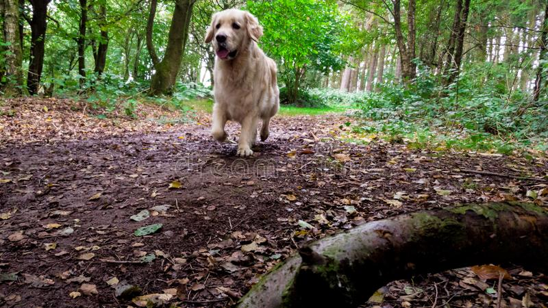 Hund i park royaltyfri fotografi