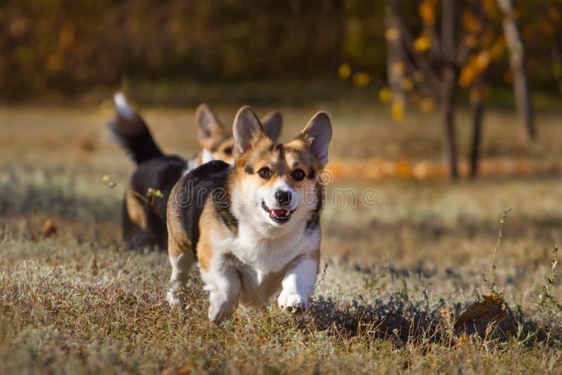 Hund i park royaltyfria bilder