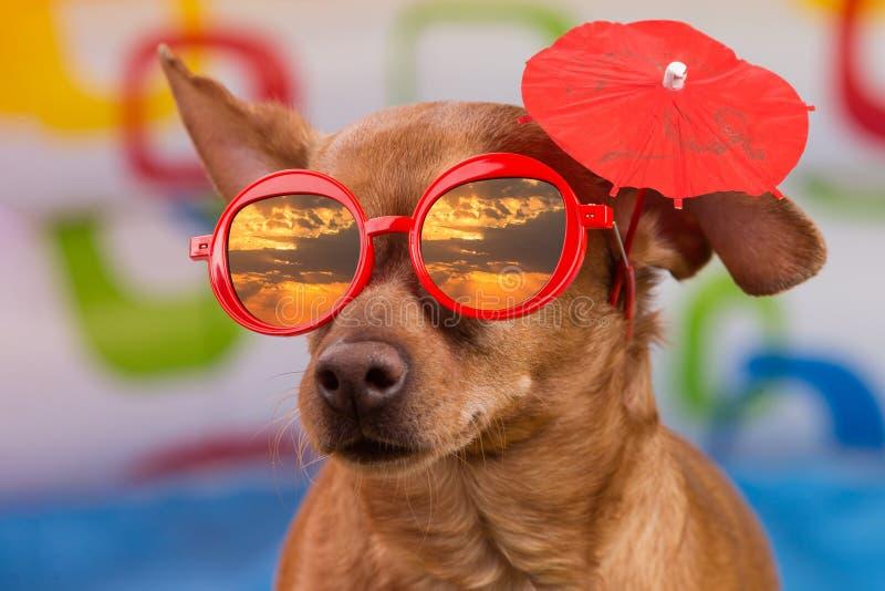 Hund i röda exponeringsglas och med ett dekorativt paraply på örat, en reflexion i den röda himlen för exponeringsglas med solen  arkivfoton