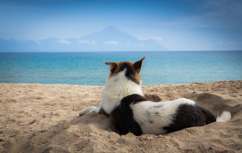 Hund i sand royaltyfri fotografi