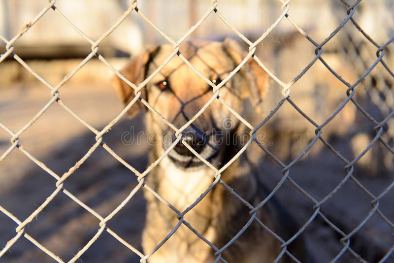 Hund i skydd arkivbilder