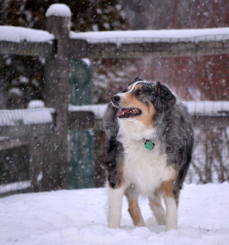 Hund i snö arkivbild